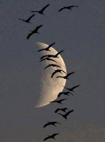ay ve kuşlar
